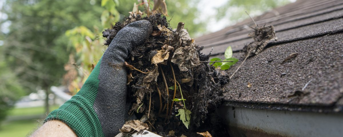 Maintenance Tips for Your Roof and Gutter